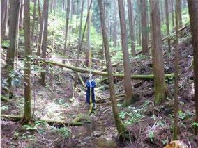 森林の現地調査を行っている様子