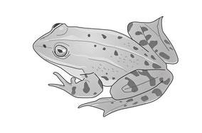 Illustrationen zum Bereich Biologie