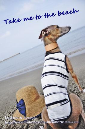 #イタグレ ヤフー ショッピング 洋服 #犬モデル 応募 募集 車 #イケメン犬 #おしゃれストーリー #ミドルチェンジ #僕イケメン #イタグレフォーン #イタグレパピー #イタグレ 色の種類 #犬の種類 #犬の図鑑