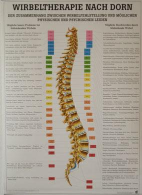 Plakat zur Wirbeltherapie nach Dorn