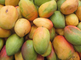 mango, melocotón de los trópicos