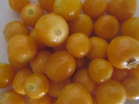 uchuva, goldenberry, uvilla, aguaymanto, coztomate, alquequenje peruano, capulí, poga poga, tomate silvestre, tomatillo