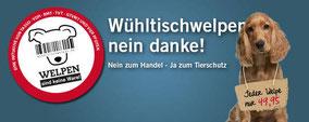 Chi-Love.de | Abstammungspapiere - worauf muss ich achten?