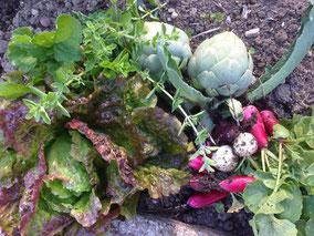 ICD Image récolte légumes potager #Municipales 2020 #Seyssins