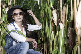 Maisfeld im Unterallgäu