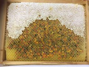 Beau cadre de réserves de miel et de pollen pour l'hiver