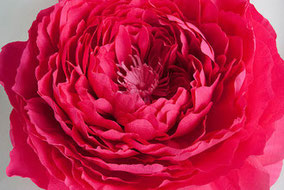 peonia-gigante-papel-flor