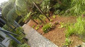 Clip n Clean Garden tidy up