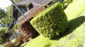 Clip n Clean Property Maintenance Hedging