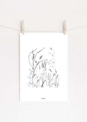 affiches botanique illustration france nature