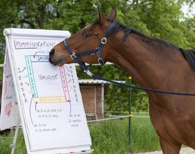 Kommunikation im Team verbessern - Teamcoaching mit Pferden - horse-feedback.ch