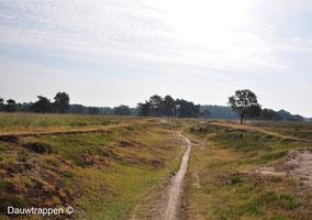 Natuurgebied Bakkeveen