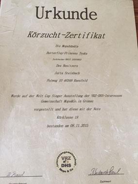 Urkunde - Körzucht-Zertifikat - Mopshobbyzucht Raesfeld - Kreis Borken - NRW