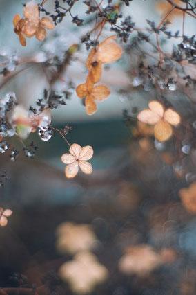 fleursuspenduequisereflètedansleau