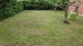 庭の草刈り後