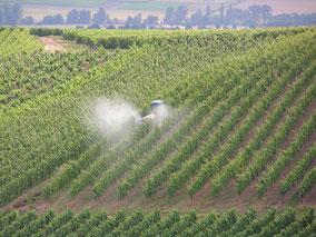 Pflanzenschutz, Reben sprühen, Sprühdrohne, Gebläsespritze, Smart Farming, Reben Pflanzenschutz, PSM