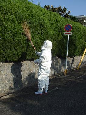 蜂の巣探し