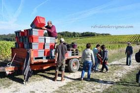 journée vendanges à la main - AOC Vouvray - Rendez-Vous dans les Vignes