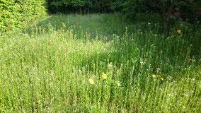 庭の草刈り前