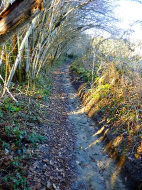 Nombreux chemins pour vos balades à pied ou en vélo