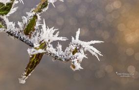 Tips voor het fotograferen in de kou en in de sneeuw