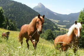 Gite_cheval_d_or_Chevaux