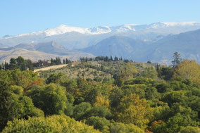 Spanien Individualreise, Wunschdatum Andalusien Reise
