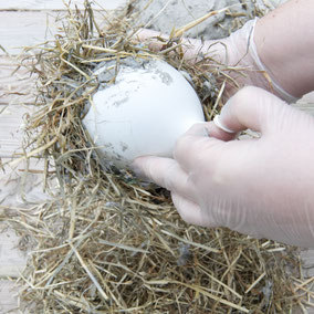 Taking the DIY straw concrete Easter nest by PASiNGA tutorials of the balloon