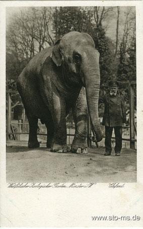 Der legendäre Elefant August