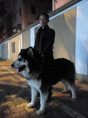 飯食って帰る途中。茅台路を歩いてたら大きな犬を見つけた。写真撮らせてもらった。アラスカの犬、2才、60㎏。 【阿拉斯加ālāsījiā】 〈地名〉アラスカ