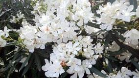 花が咲いてた。きれいだった。名前はわからない。中国語の名前もわからない。