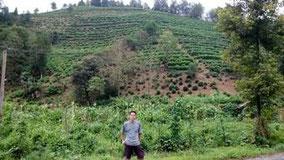 安徽省黄山市祁门县祁红乡の茶山にさっき行った。