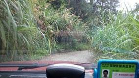 村の小学校に行く途中。