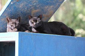 Warten auf der Mülltonne auf die nächste Mahlzeit