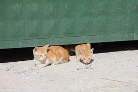 Die ganz Kleinen haben es am Schwersten - sie können noch nicht in die Mülltonne springen und nach Essensresten suchen!