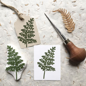 Tampon fougère asplenium cuneifolium