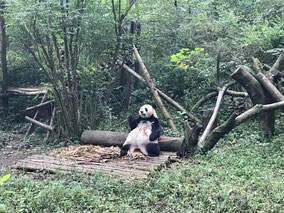 panda's china
