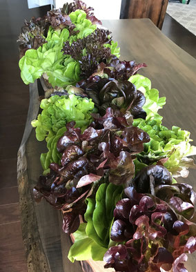 A row of Balcony to Table Lettuce along the dining table.