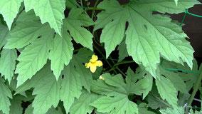 小さいけど一番最初のお花