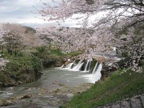 十二ヶ滝の桜