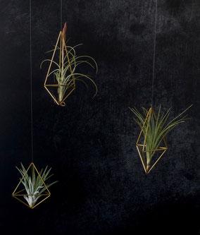 Schmuck für Zuhause: Handgefertigte Luftpflanzenhalter aus dünnen Messingrohren, in denen Tillandsien oder Luftpflanzen wunderbar Platz finden.