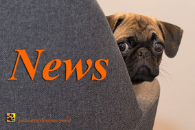 www.tiere-aus-andalusien.com/news