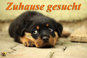 www.tiere-aus-andalusien.com/zuhause gesucht