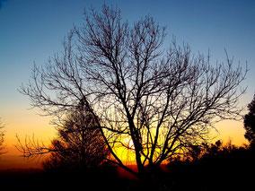Ondergaande zon in een bebost winterlandschap. Kleurfoto.
