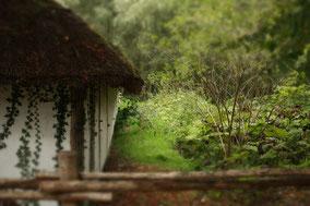 Oude boerderij met rieten dak en witte muren. Kleurfoto.