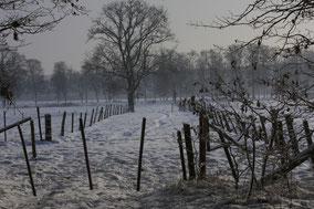 Weidelandschap in de sneeuw met op achtergrond bomen. kleurfoto.