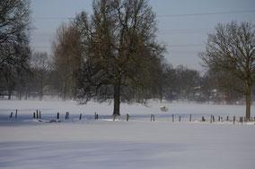 Sneeuwlandschap met op de achtergrond bos en weide. Vooraan twee bomen en omheining. kleurfoto.