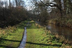Landschap met een smal voetpad en een beek metaan beide kanten een bomenrij.