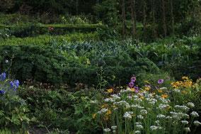 Een boeren groentetuin met spinazie, kool en boontjes.
