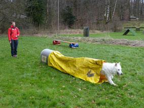 Bild: Merlin Aragon vom weissen Wächter Lawinenhundestaffel